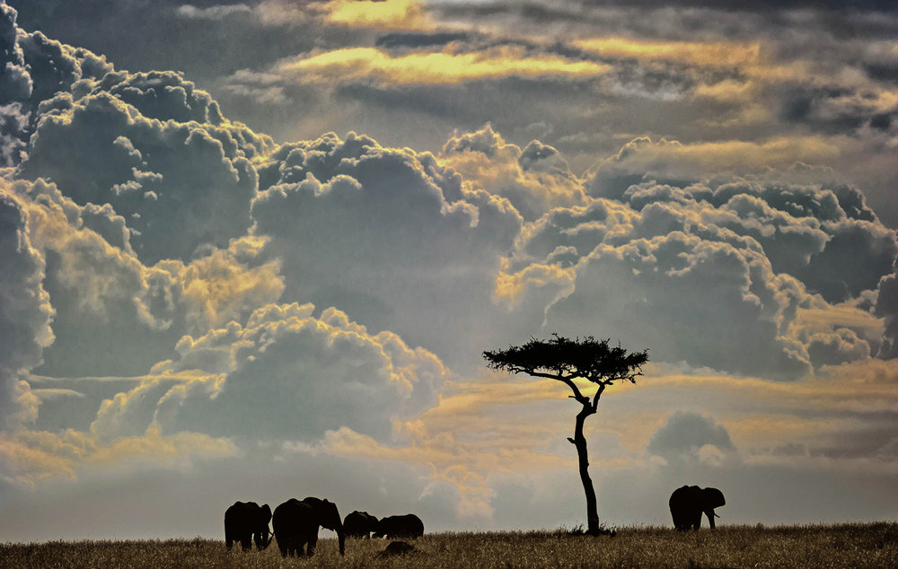 Masai-Mara-CloudscapeMTA_110917_1592.jpg