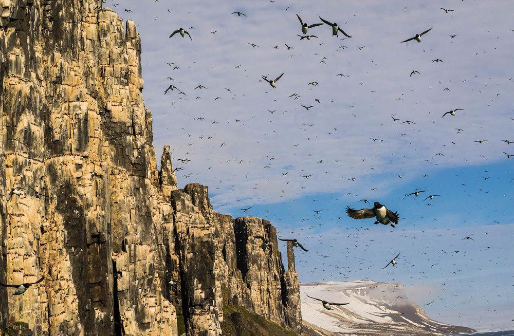 Arctic-Birds_Svalbard-Final-5667.jpg