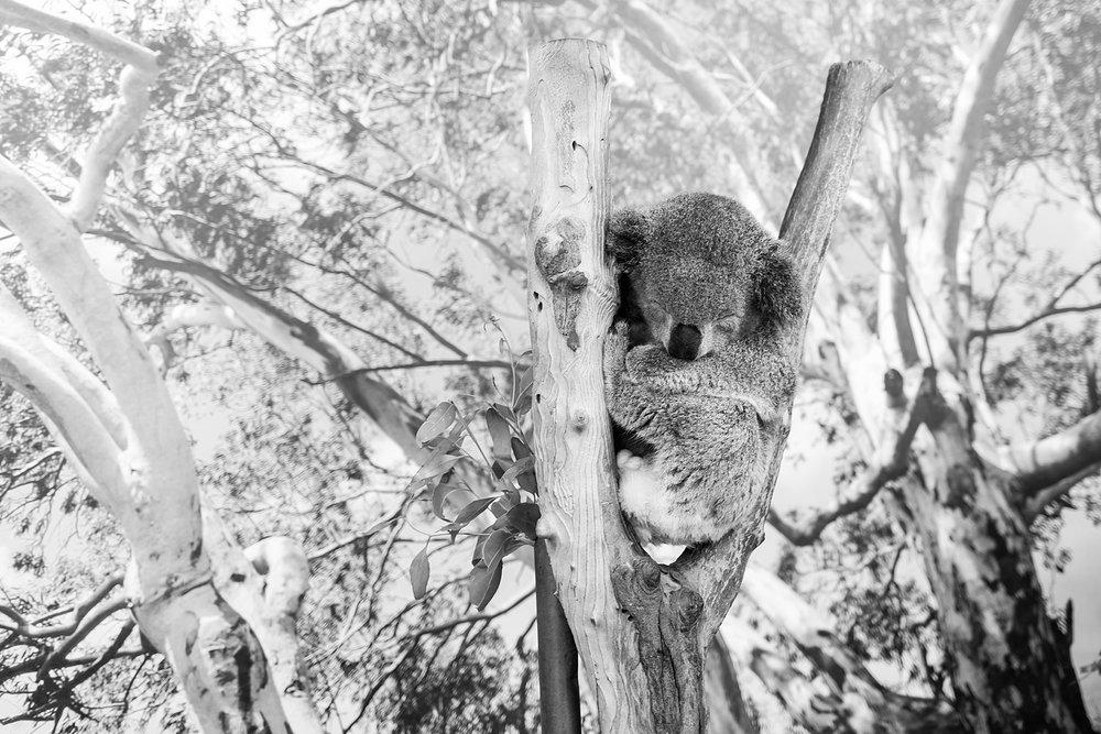 featherdale-wildlife-park-australia_0146.jpg