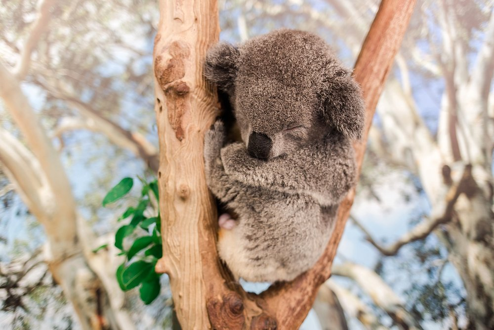 featherdale-wildlife-park-australia_0147.jpg