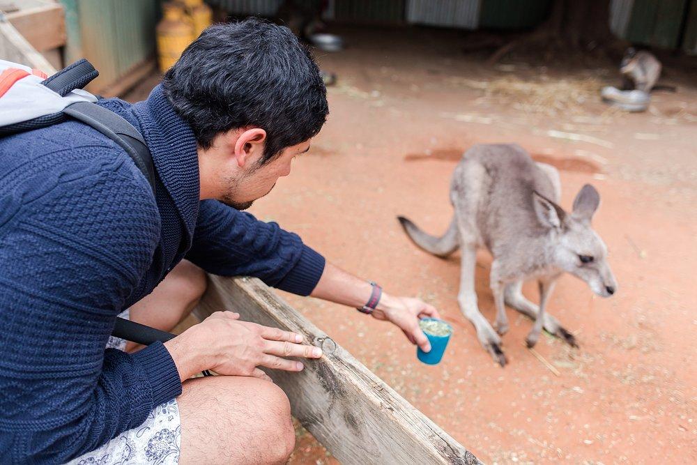 featherdale-wildlife-park-australia_0151.jpg