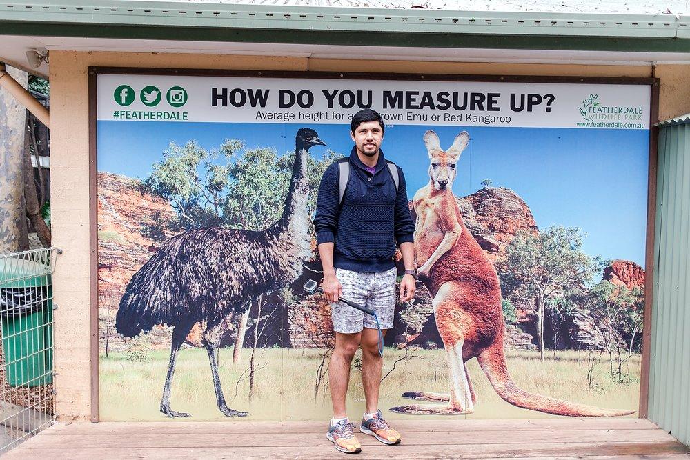 featherdale-wildlife-park-australia_0157.jpg