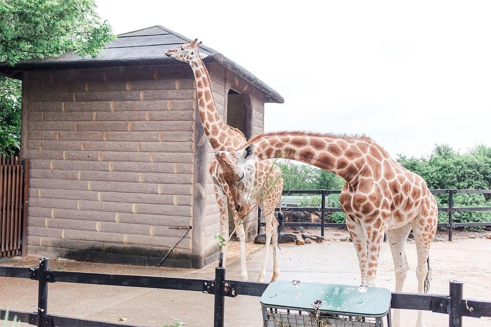 taronga-zoo-sydney-australia_0167.jpg