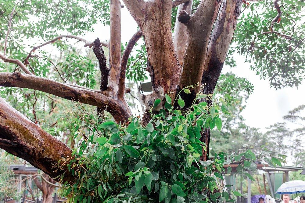 taronga-zoo-sydney-australia_0168.jpg
