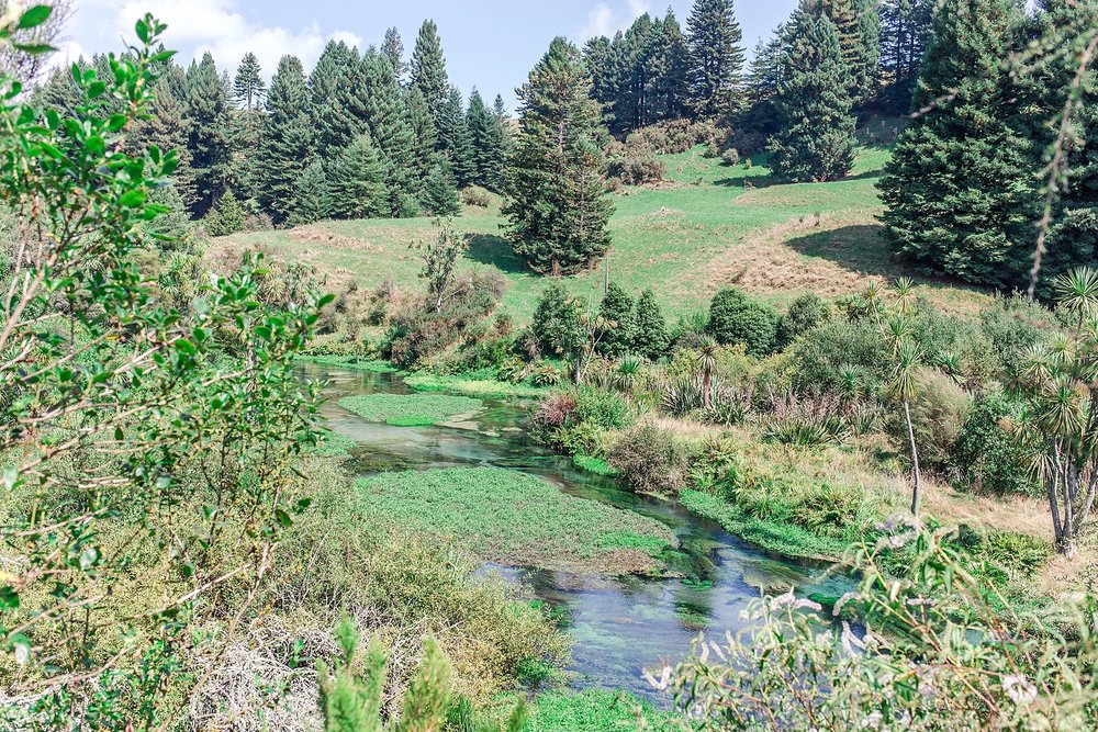 north-island-blue-springs-putaruru-new-zealand-scenery_0230.jpg