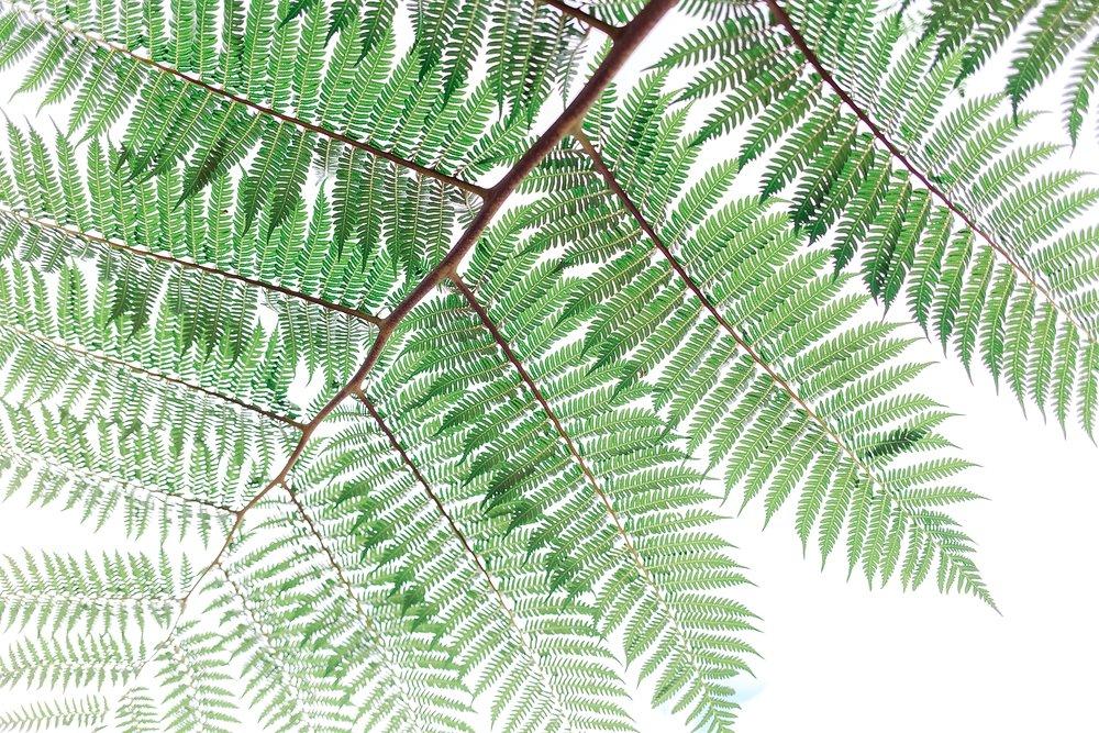 kuranda-rainforest-village-cairns-australia_0175.jpg