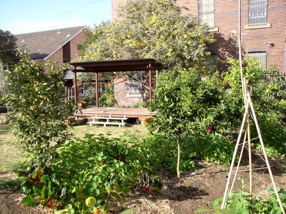 Erskineville Public School Community Garden.JPG