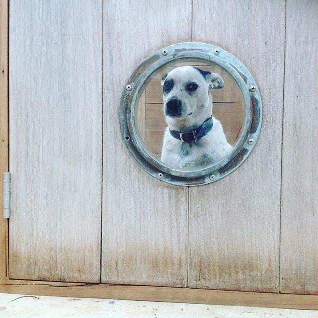 Custom dog door