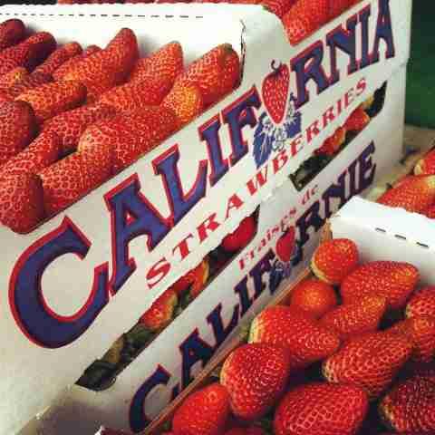 Strawberries Farmers Market Santa Barbara