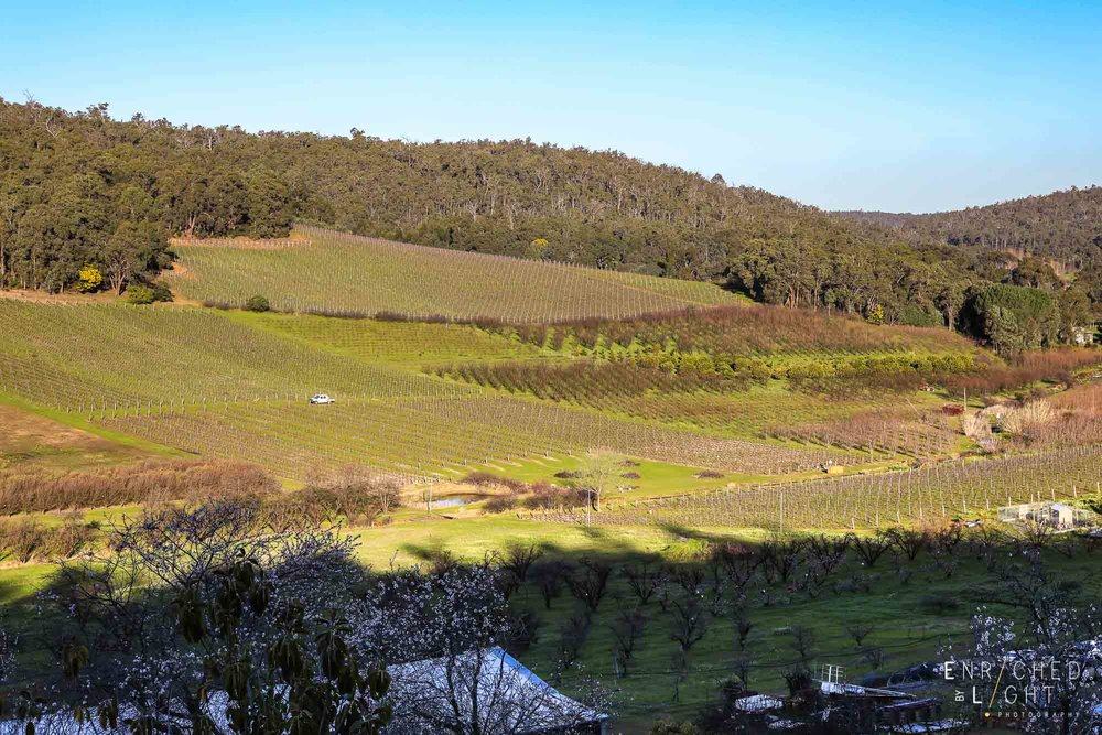 EBL - Bickley Valley - Plume Estate