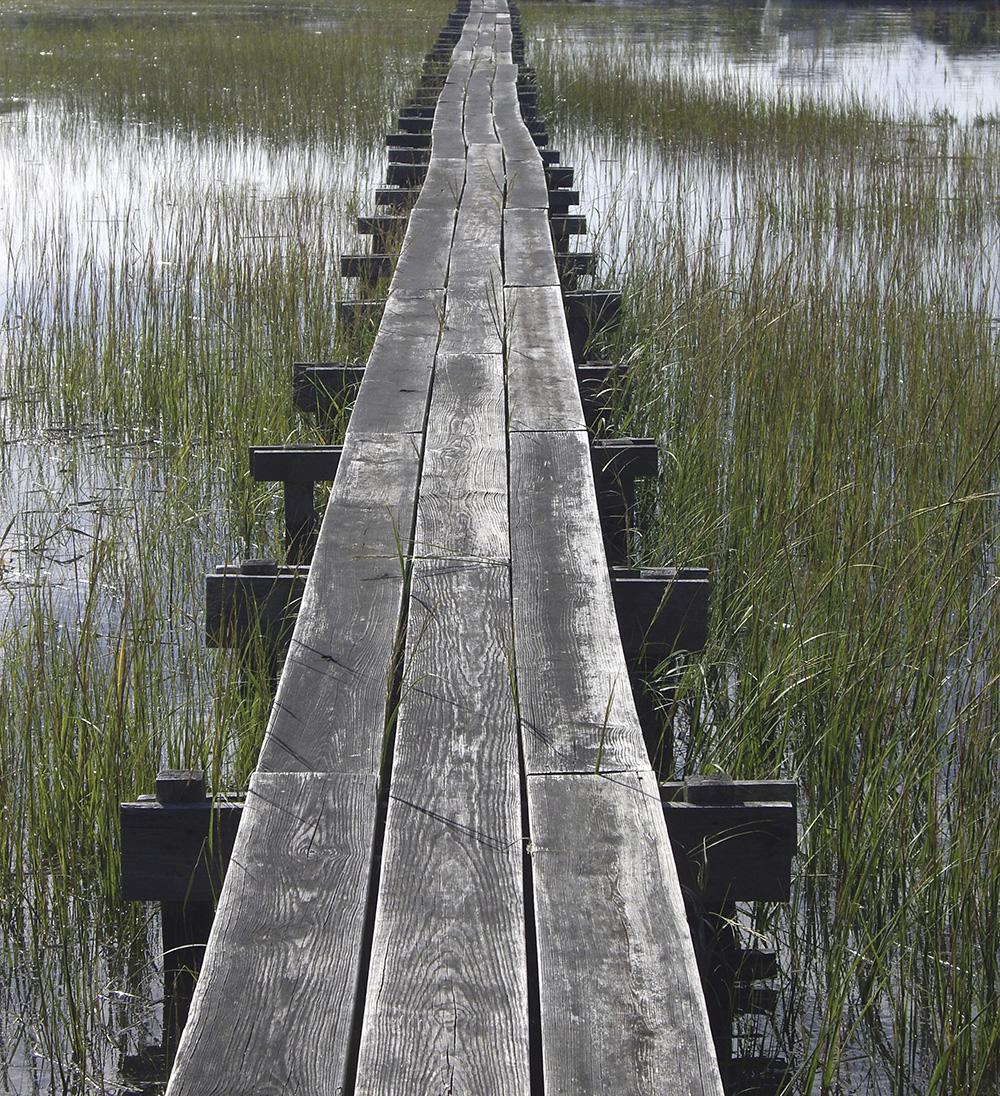 marsh walkway.jpg