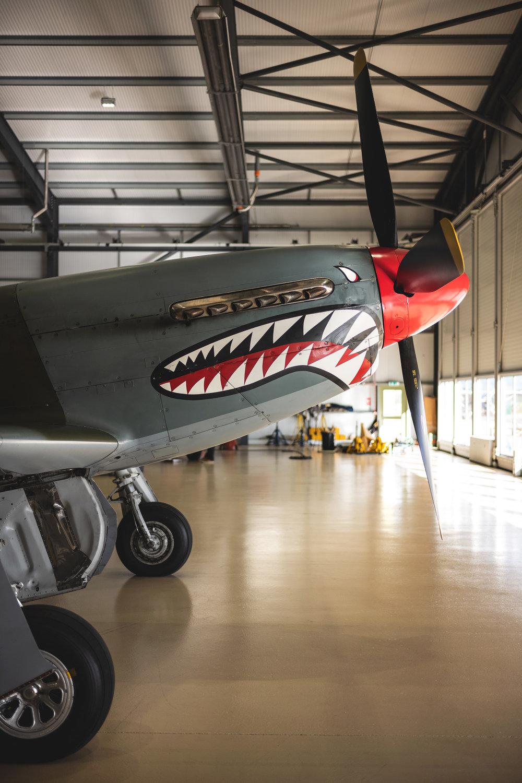 P51-Mustang-Shark_15.jpg