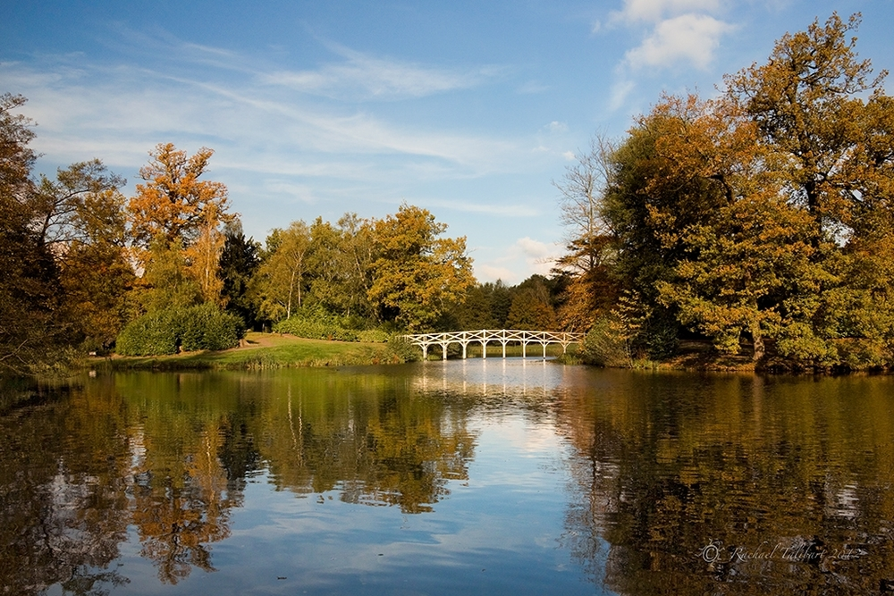 The Bridge at Painshill Park
