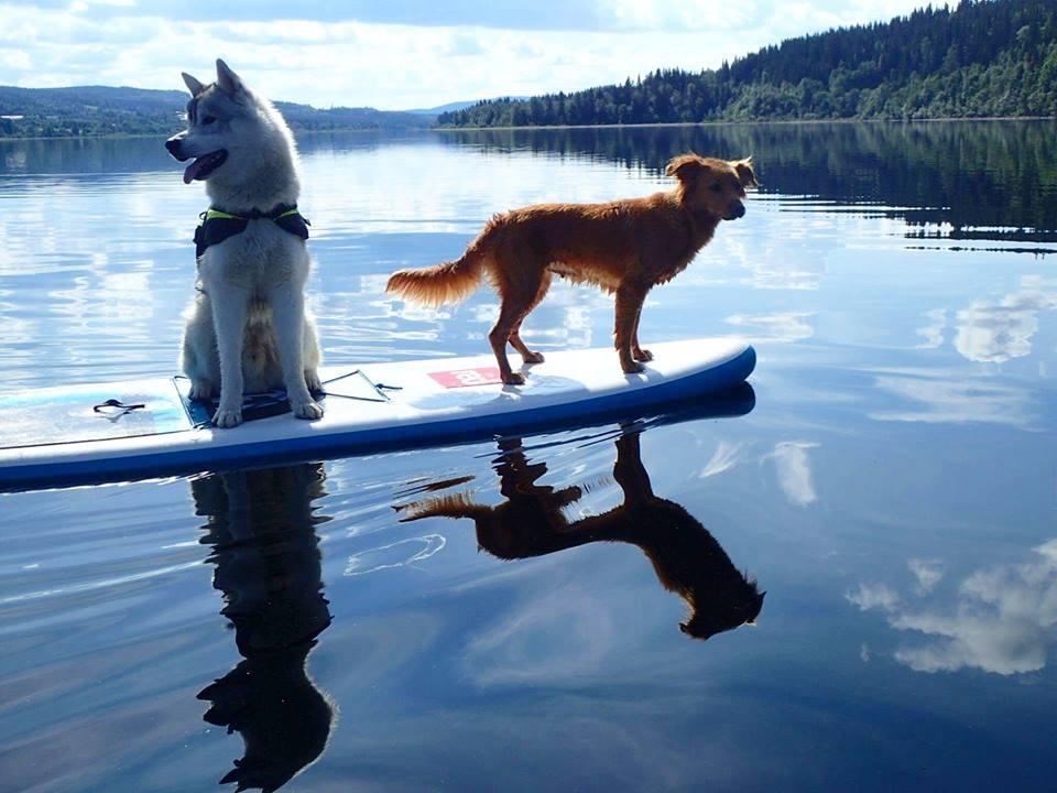 På paddlingstur med Tikaani och Yra (Och Mattias F, Elle och Anna) Foton: Mattias Fredriksson