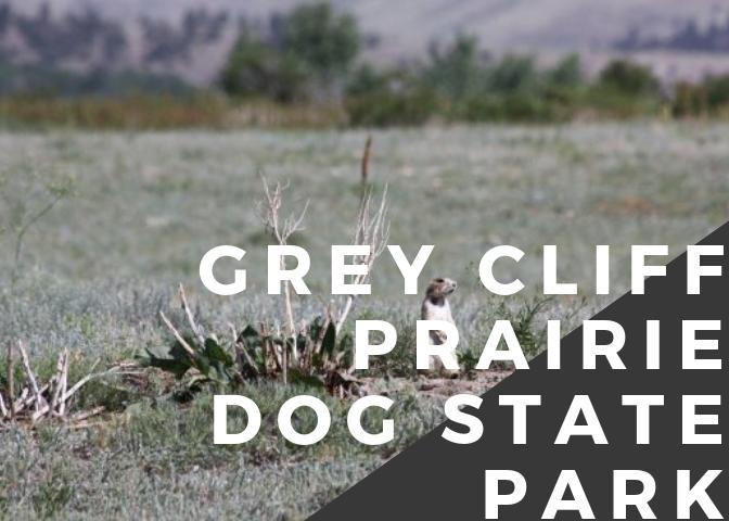 Greycliff Prairie Dog.png