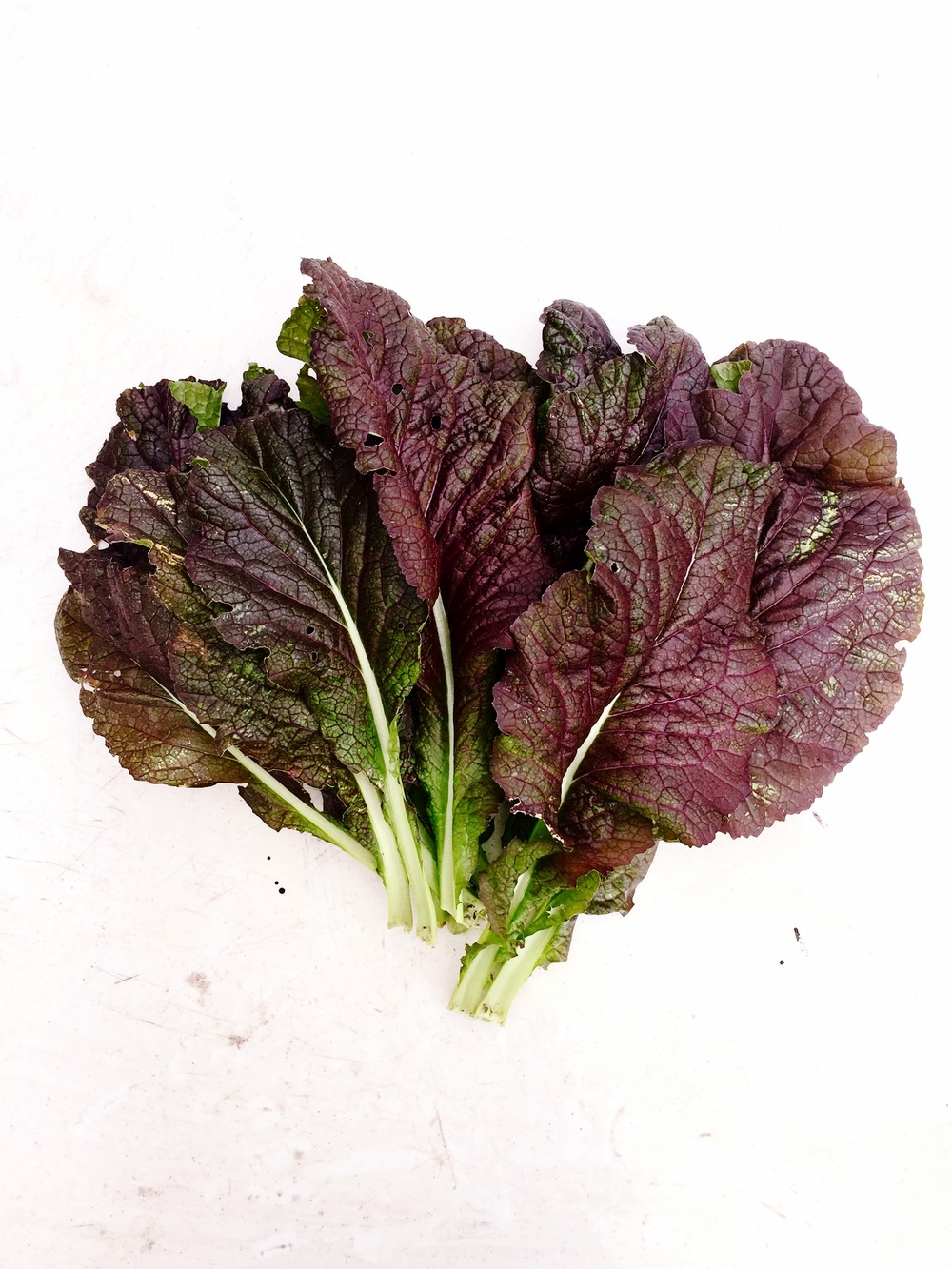 GIANT RED MUSTARD GREENS