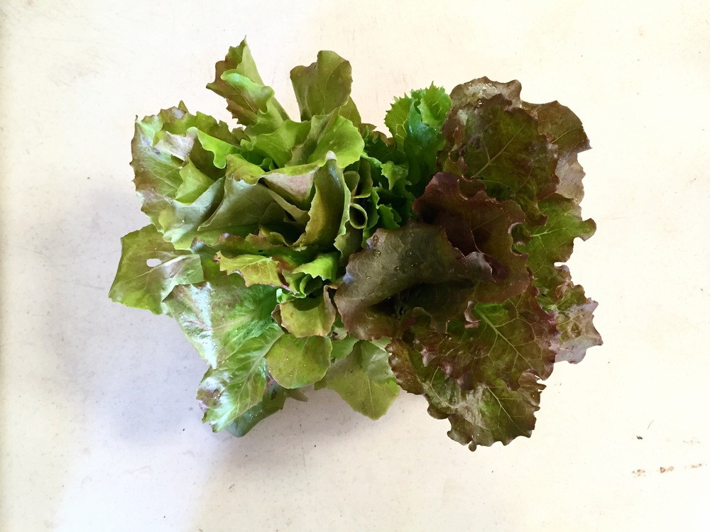 LETTUCE (assorted)