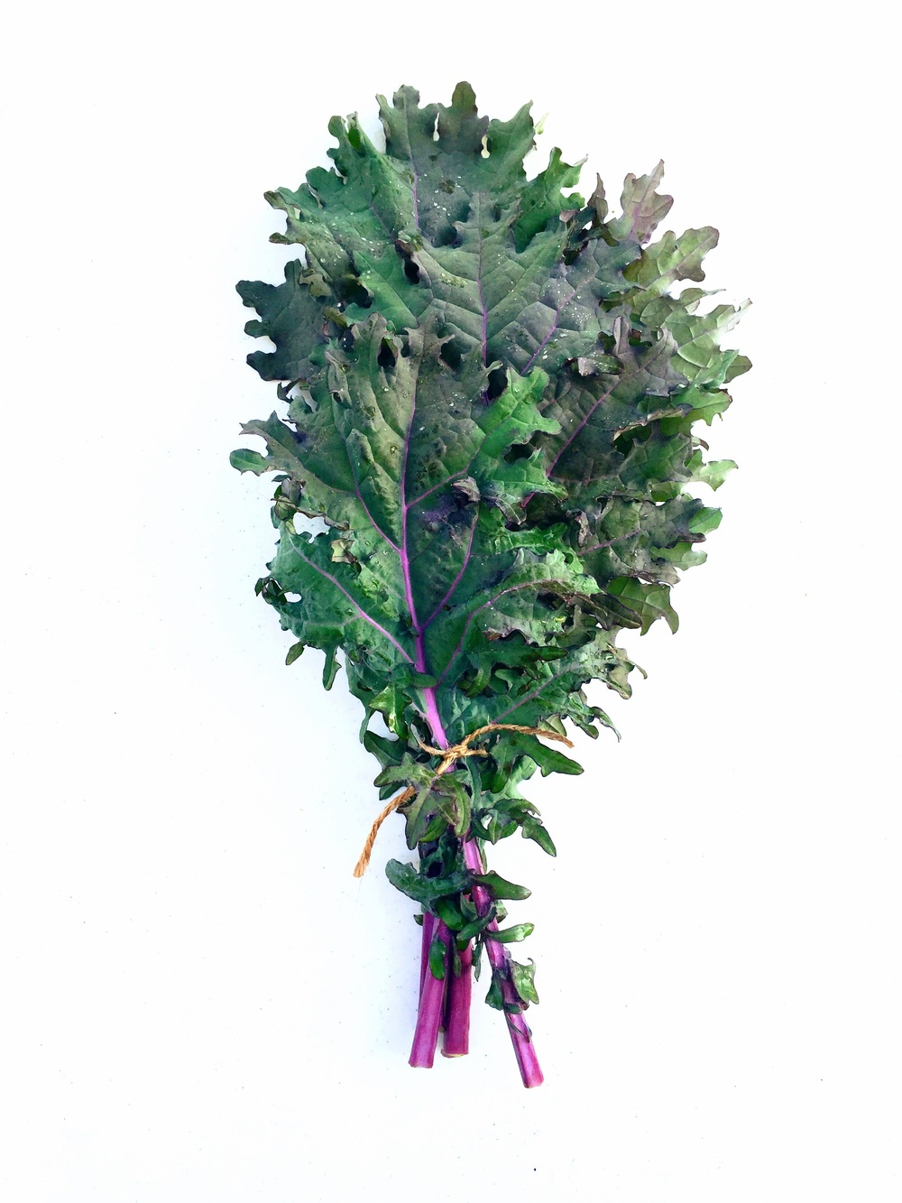 RED WINTER KALE