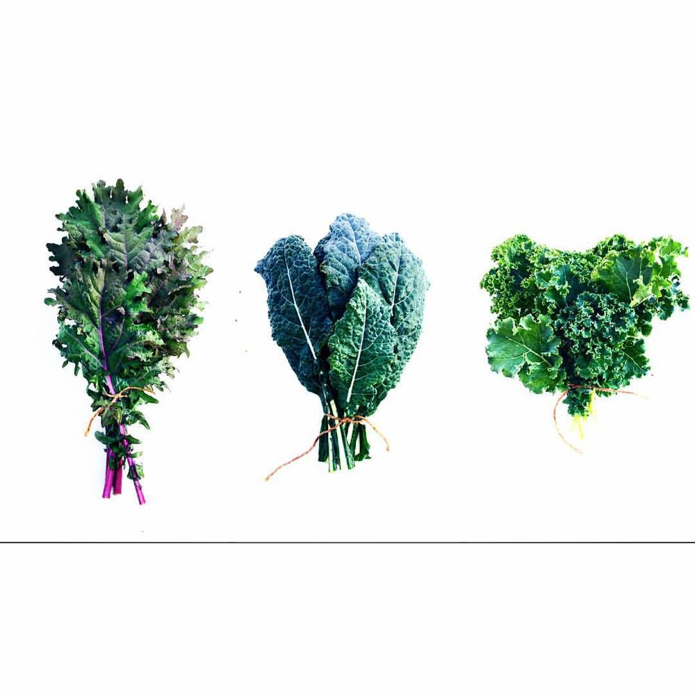 ASSORTED BUNCH OF KALE