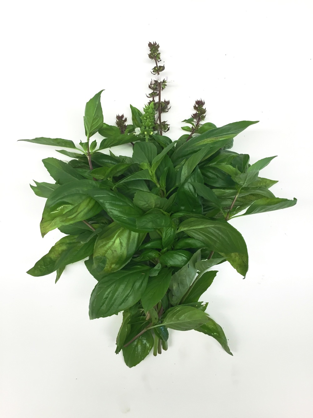 ASSORTED BASIL