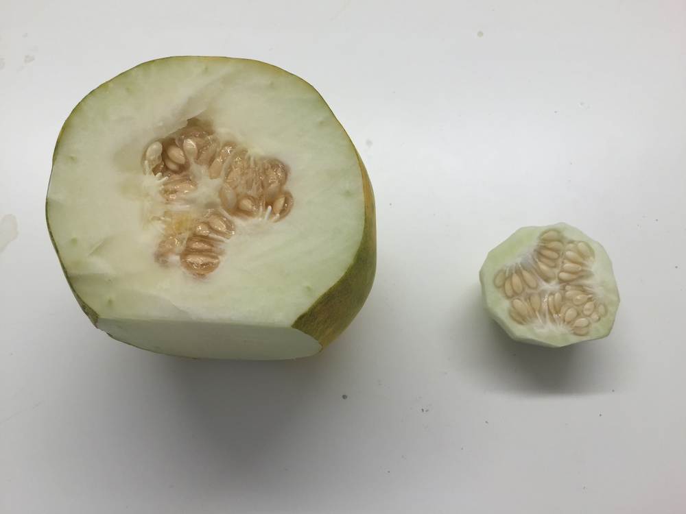 Cutting the core out of this cuke helps mitigate the bitterness of the seeds.