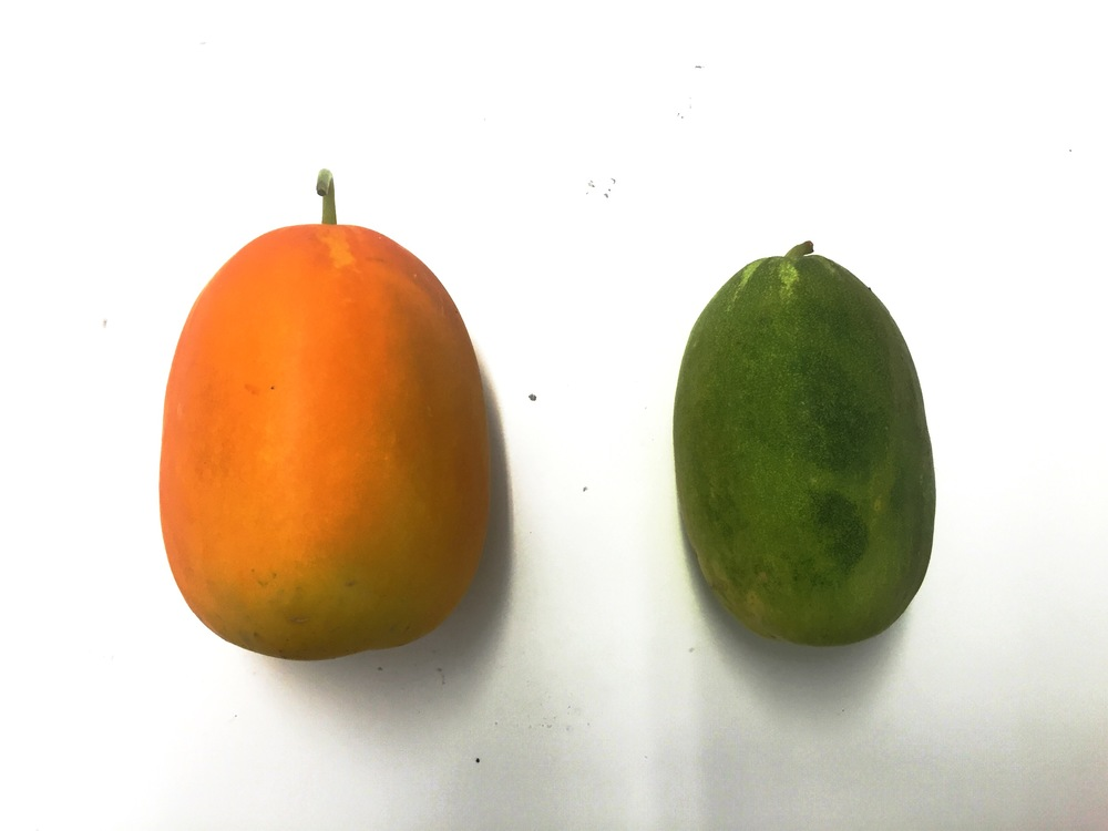 Yellow vs Green cukes