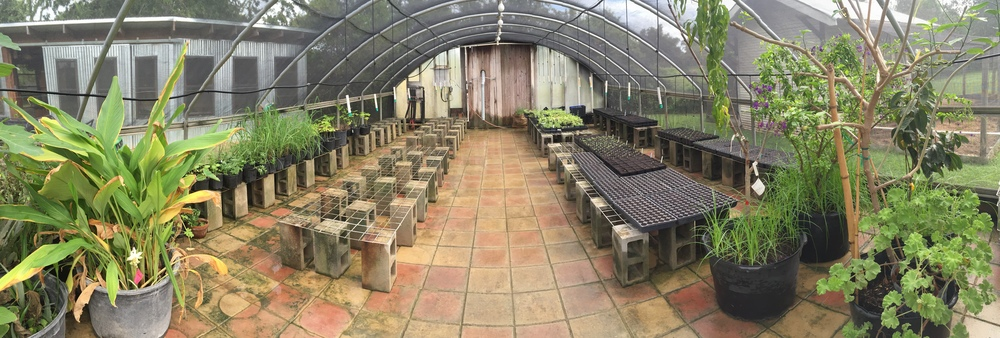 Just finished renovations, including a brand new irrigation system, in our new greenhouse for all our new fall seedlings. We're seeding at nearly three times the capacity of our old greenhouse!