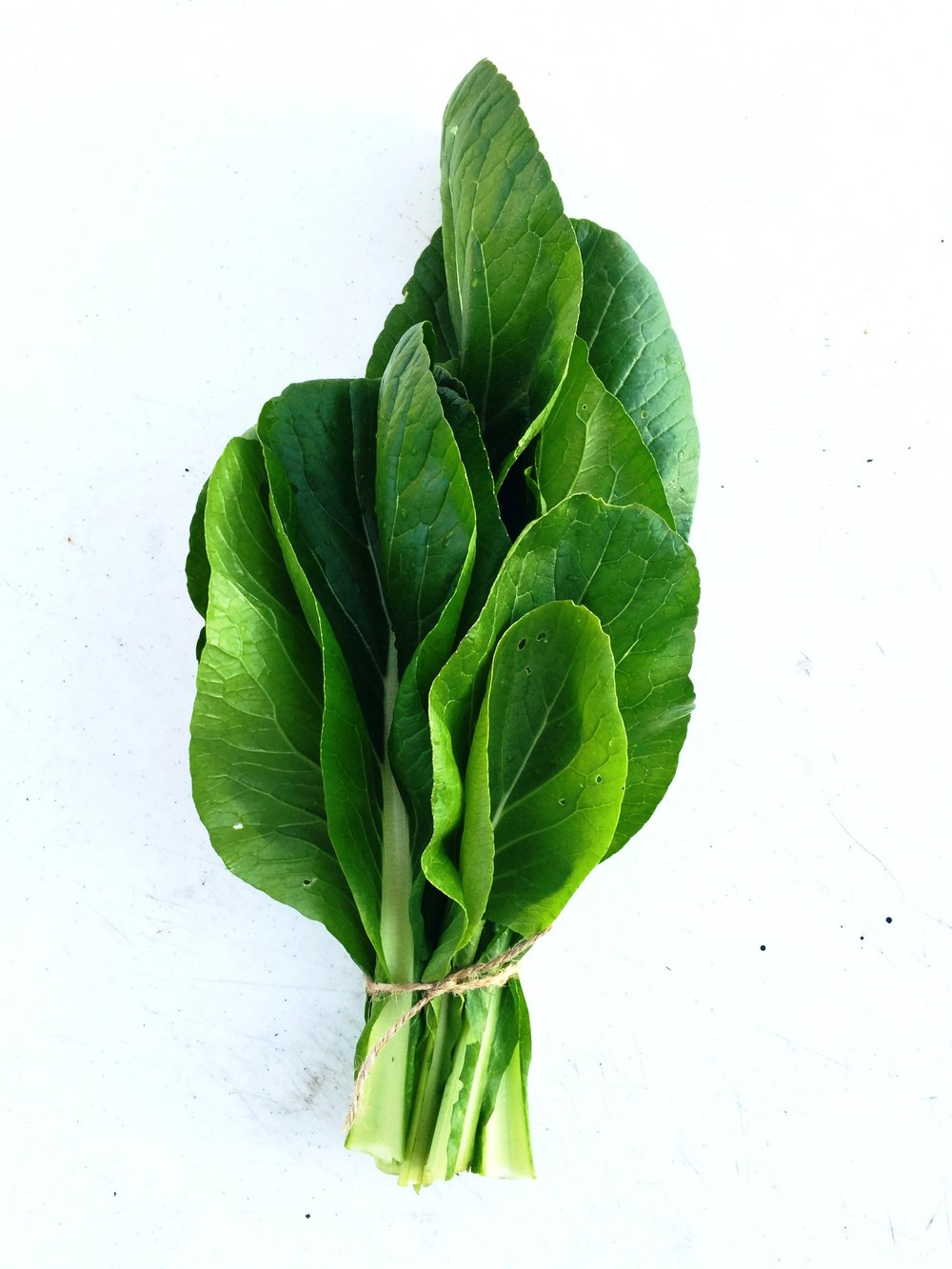 TENDERGREEN MUSTARD SPINACH