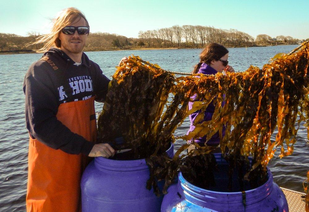 Kelp harvest!