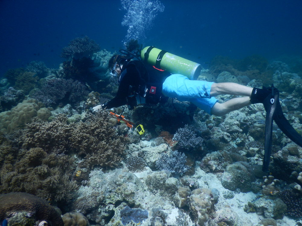 Austin laying out transect tape in Wakatobi