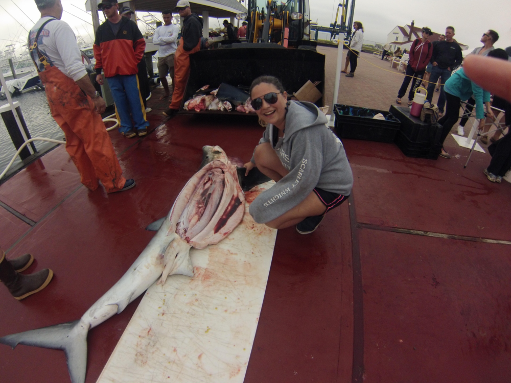 Katie at a shark tournament where National Marine Fisheries Service (NMFS) scientists collected blue shark age, reproduction, and food habits data opportunistically