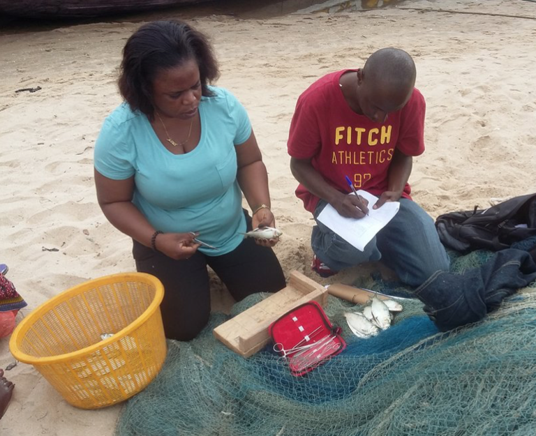 Evans hard at work gathering data in Ghana and training his field assistant on what measurements to take from the Sardinella