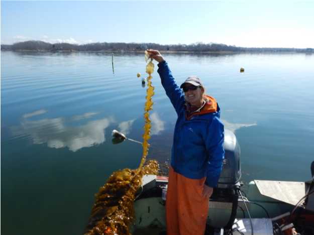 Cindy West holds up a piece of her sugar kelp earlier in the season.  Photo credit: Celeste Venolia
