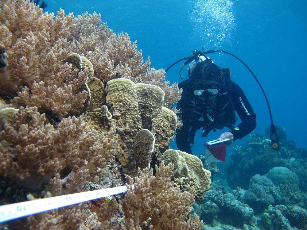 Pulau Popaya (22).JPG
