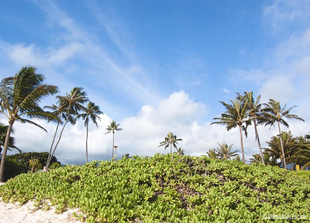 easter-hawaii-landscape-travel-pictures-5.jpg