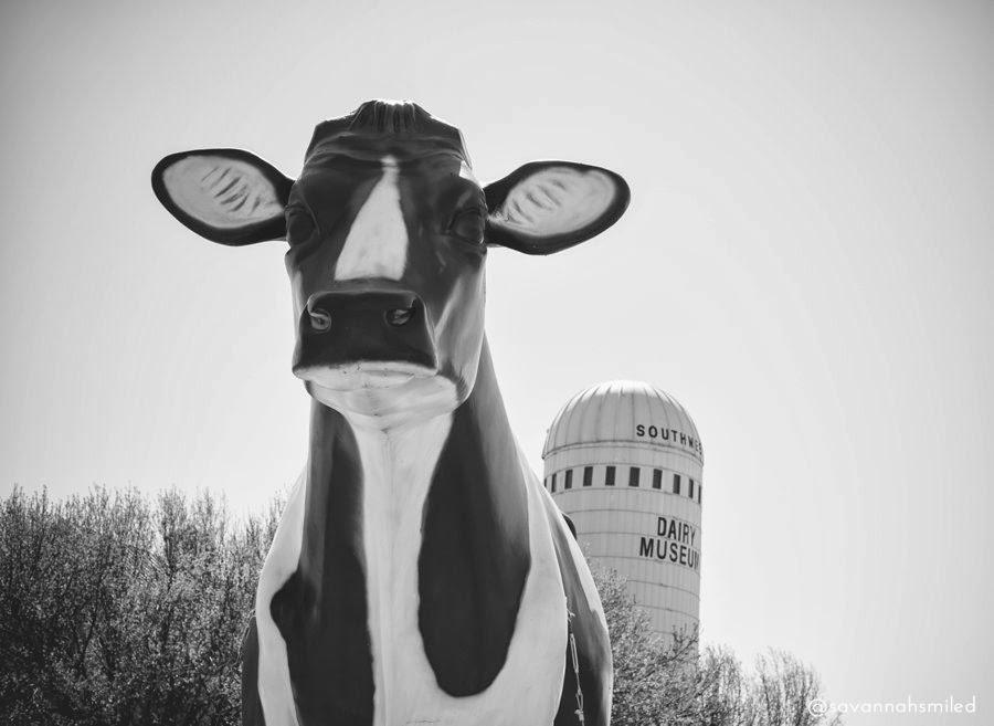 dairy-museum-sulphur-springs-dairy-cow-photo.jpg