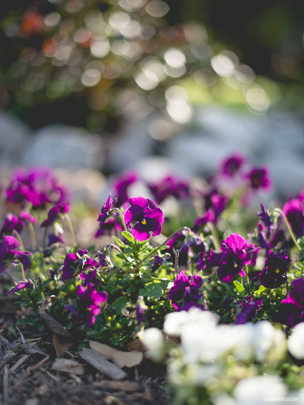 happy-may-flowers-2015-2.jpg