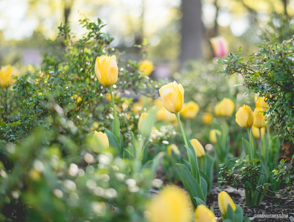 happy-may-flowers-2015-4.jpg