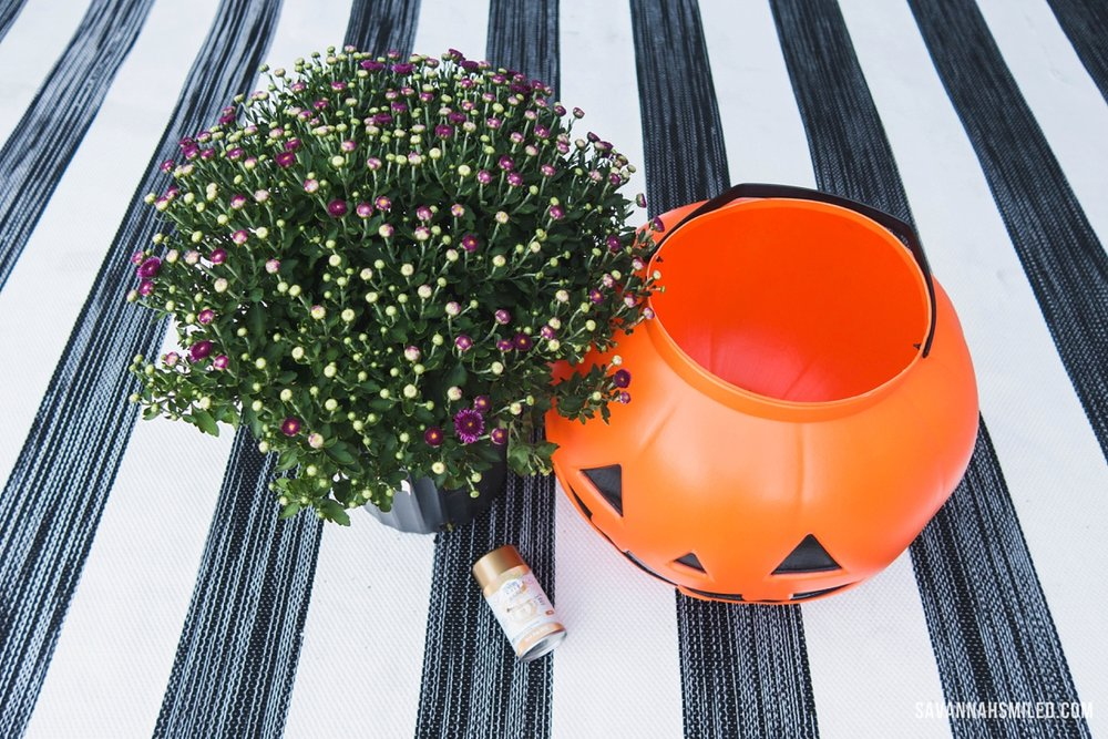 pumpkin-porch-mums-7.jpg