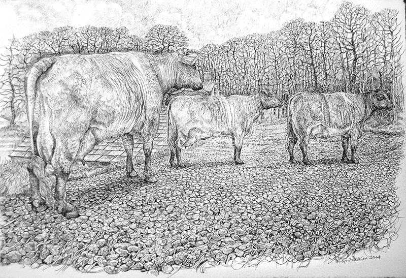The Small Cow House 2 - Y Beudy Bach 2   pen on paper - pen ar bapur   Price -  Pris  £1,195