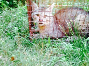Pharrell the Big Mean Feral. He looked . .Happy . . when I released him.