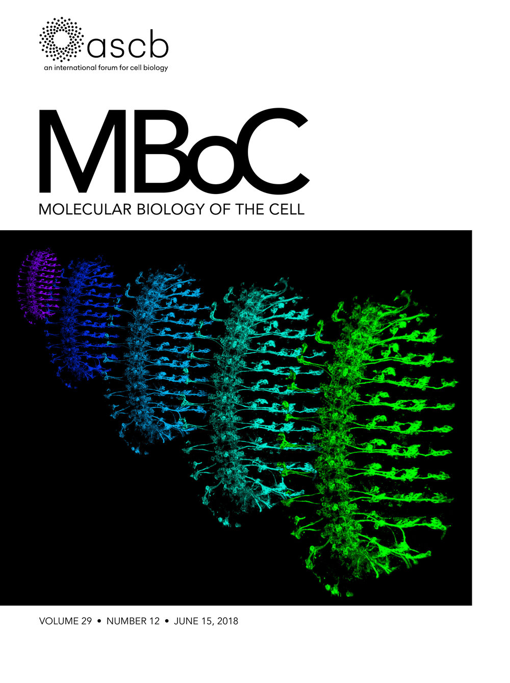 mboc.2018.29.issue-12.cover.jpg