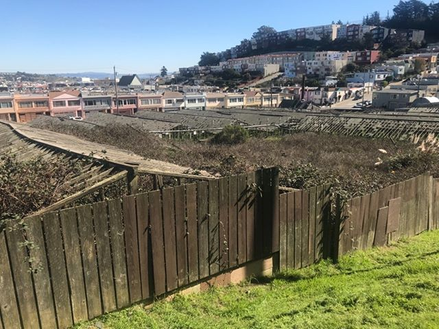 SIGN THE PETITION! An inspiring group of Portola neighbors have joined together as Friends of 770 Woolsey to petition the city to support the preservation of agricultural activity at 770 Woolsey Street. We're excited by their progress - help them top 1,000 signatures today! Link in profile