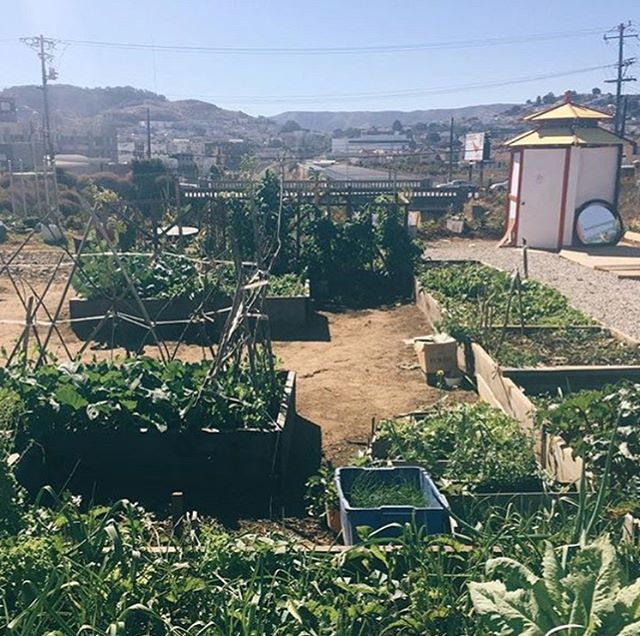 SAN FRANCISCO— Starting this Sat 8/4, our friends at the Florence Fang Asian Community Garden in the Bayview will be hosting a weekly Growers Market. Produce & herbs for sale from community gardens around southeast SF! This is a fantastic chance to support some of our most local growers. See you there!