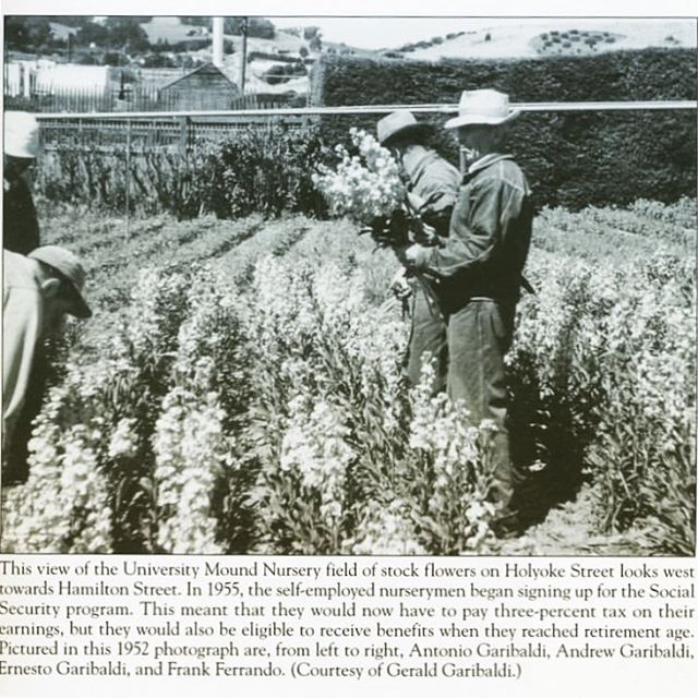 Happy new year from The Greenhouse Project! We're still here, advocating for the preservation & revitalization of this historical agricultural site in SF. Stay tuned for updates and ways to support in 2019!  Here is a stock harvest at the old greenhouse site — a regram from our neighbors at @friends_of_770_woolsey ! They are offering fantastic monthly gardening tips & history on their account, in celebration of the Portola as SF's Garden District.