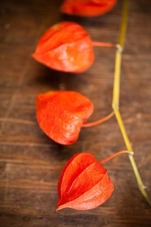 Chinese Lanterns — available @socalflowermarket