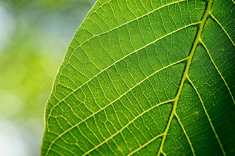 leaves-3420078.jpg