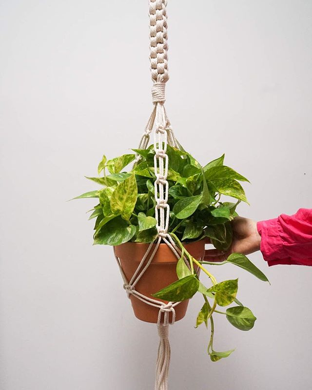 chinese square knot + marble queen pothos 💘