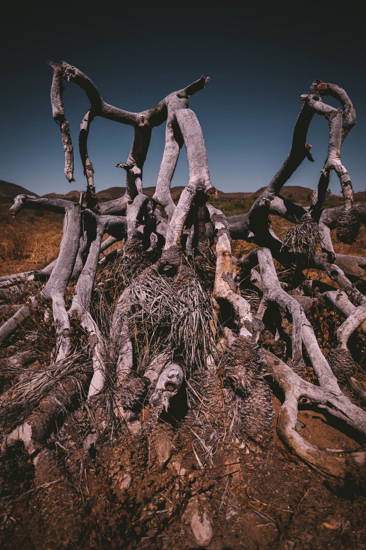 joshua-tree-travel-photo.jpg