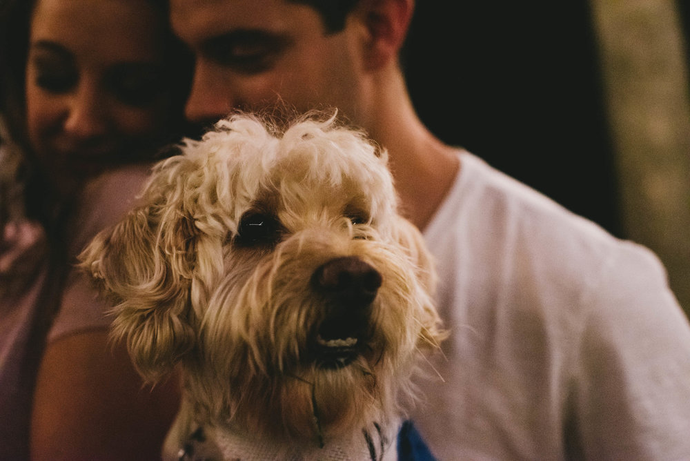 couples dog looking off as the couple get close together behind him